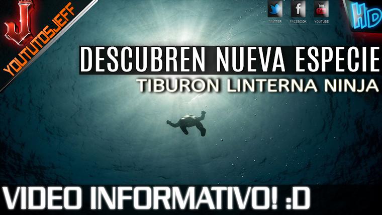 DESCUBREN NUEVA ESPECIE TIBURON LINTERNA NINJA | 2015