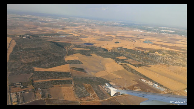 holidays forêts d'oliviers champs vus du ciel Espagne