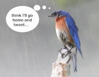 blue 'tweet' bird