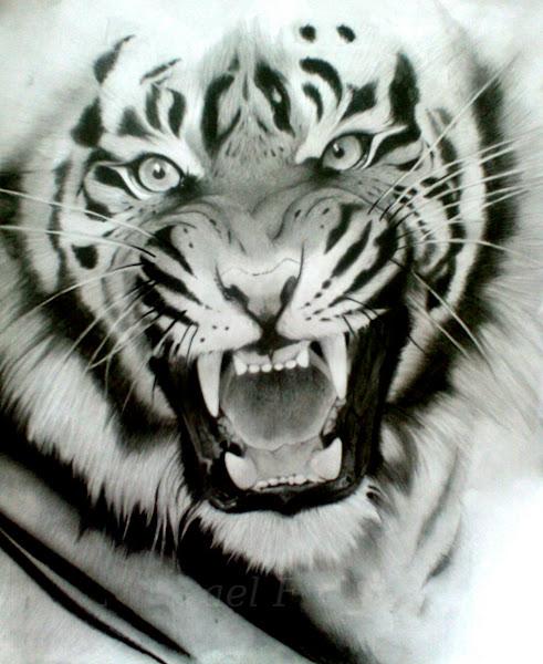 Siberian Tiger Pencil Drawing