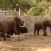 Συγκλονιστικό βίντεο... Ελέφαντες προσπαθούν να προστατεύσουν τα μικρά τους από τους βομβαρδισμούς!