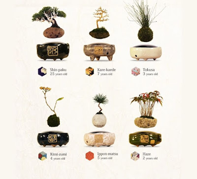 Some of the different base and planter variants