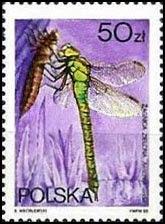 Sello polaco de una Aeshna viridis