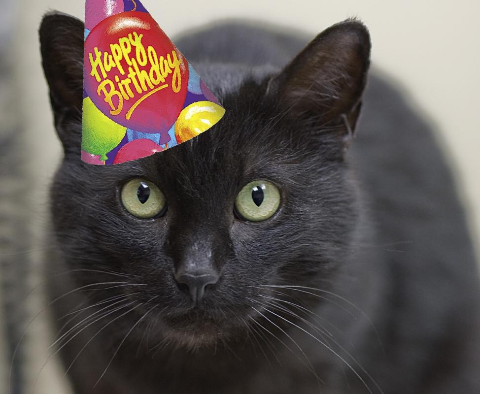 Let's Celebrate peoples! Happy+Birthday+Chicago+Cat+Rescue