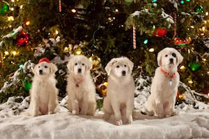 Santa Paws pups