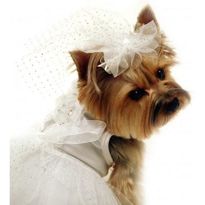 Vestido de novia para mascota bodas vestidos for Zapatos para boda en jardin