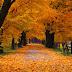 Autumn. [galeria]