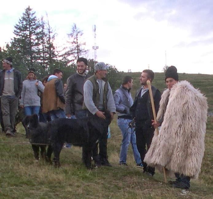 Animal fair 13