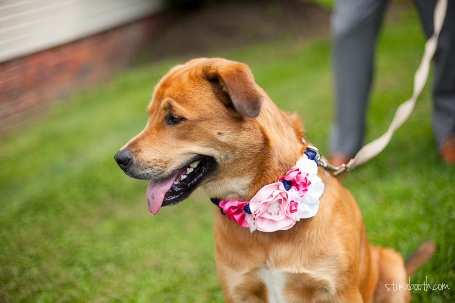 Dog Collar Flower Diy