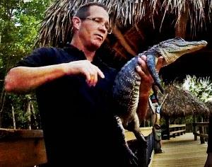 Alligatoren haut nah, zum anfassen und streicheln