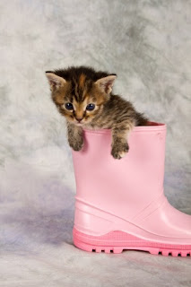 Image credit: <a href='http://www.123rf.com/photo_19084387_kitten-in-water-shoe-kitten-gumboot-flower-funny.html'>aoosthuizen / 123RF Stock Photo</a>