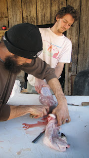 chopping off rabbit head after skinning