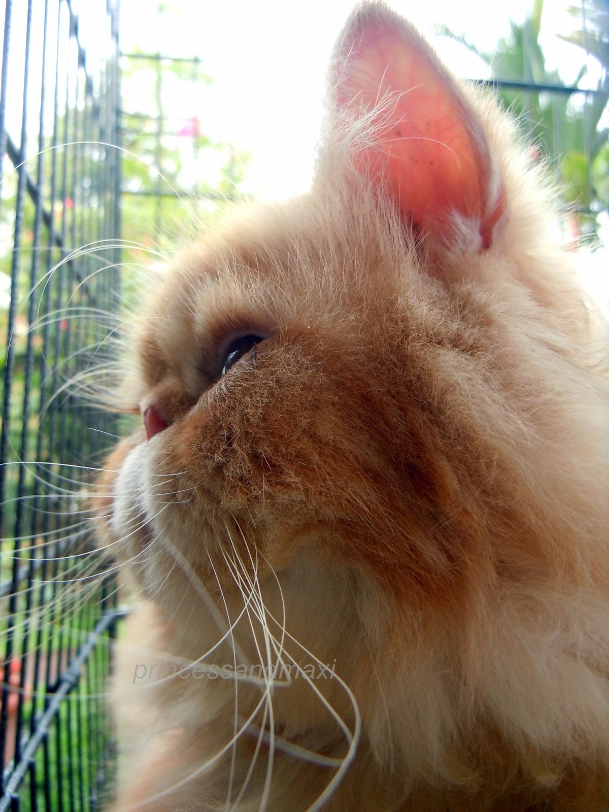 Squishy Nose Cat : MUSINGS OF A CAT: A TRIBUTE TO MAXI, ANGEL AND SAD TIMES HERE