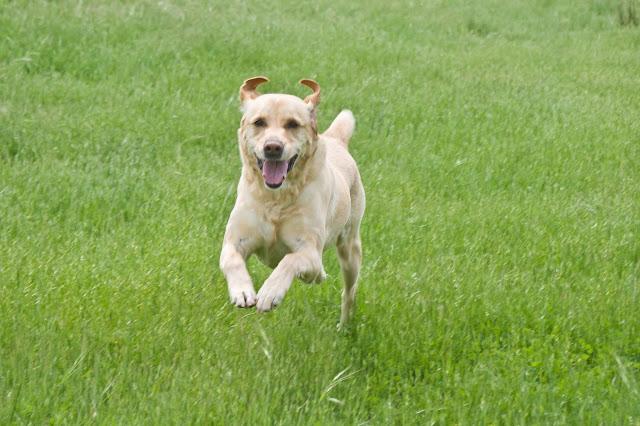 Bienvenidos al blog de Can & Dog Educación Canina