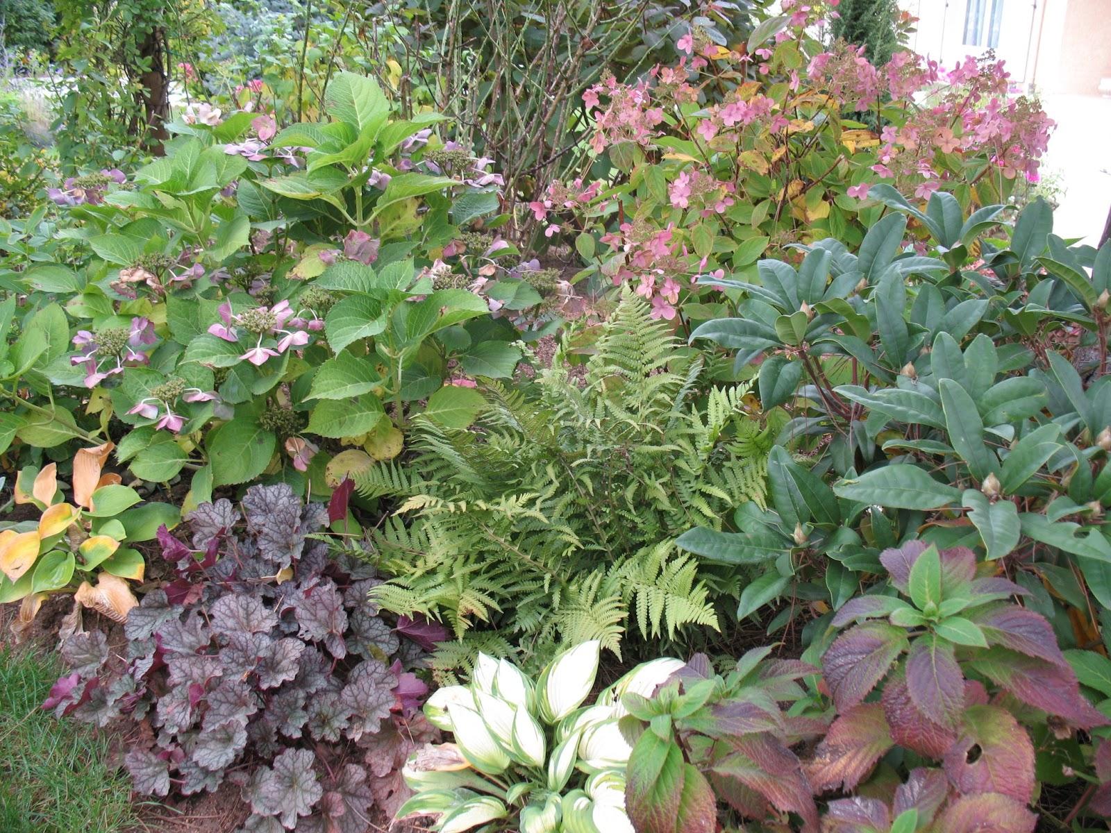 Fleurs jardin octobre meilleures id es cr atives pour la for Jardin octobre