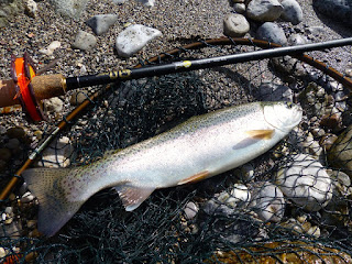 An Idrijca rainbow trout subdued on the Honryu