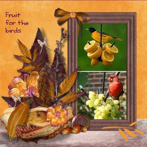 lo 1 - Sept.2016 - Fruit voor de vogels