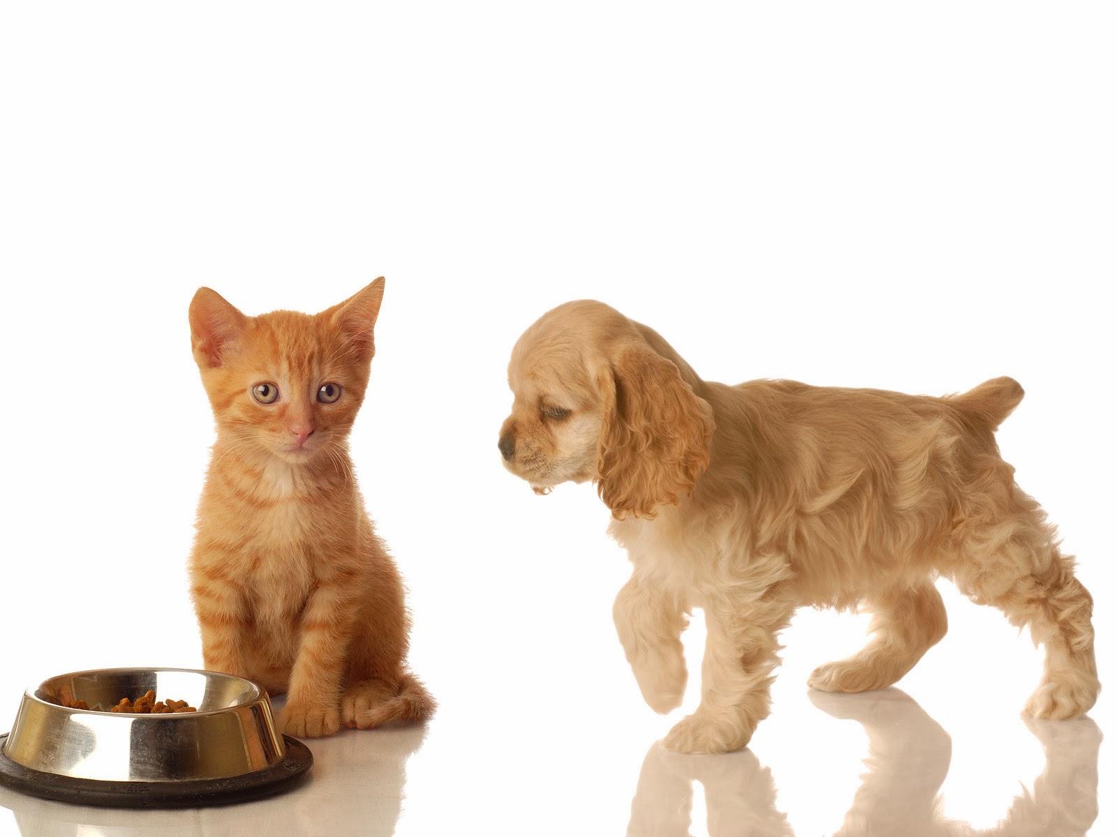 Clinica veterinaria torreblanca alimentaci n y obesidad - Alimento para gatos esterilizados ...