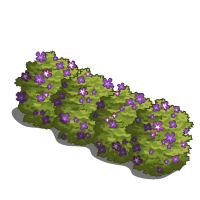 Jade Bushes