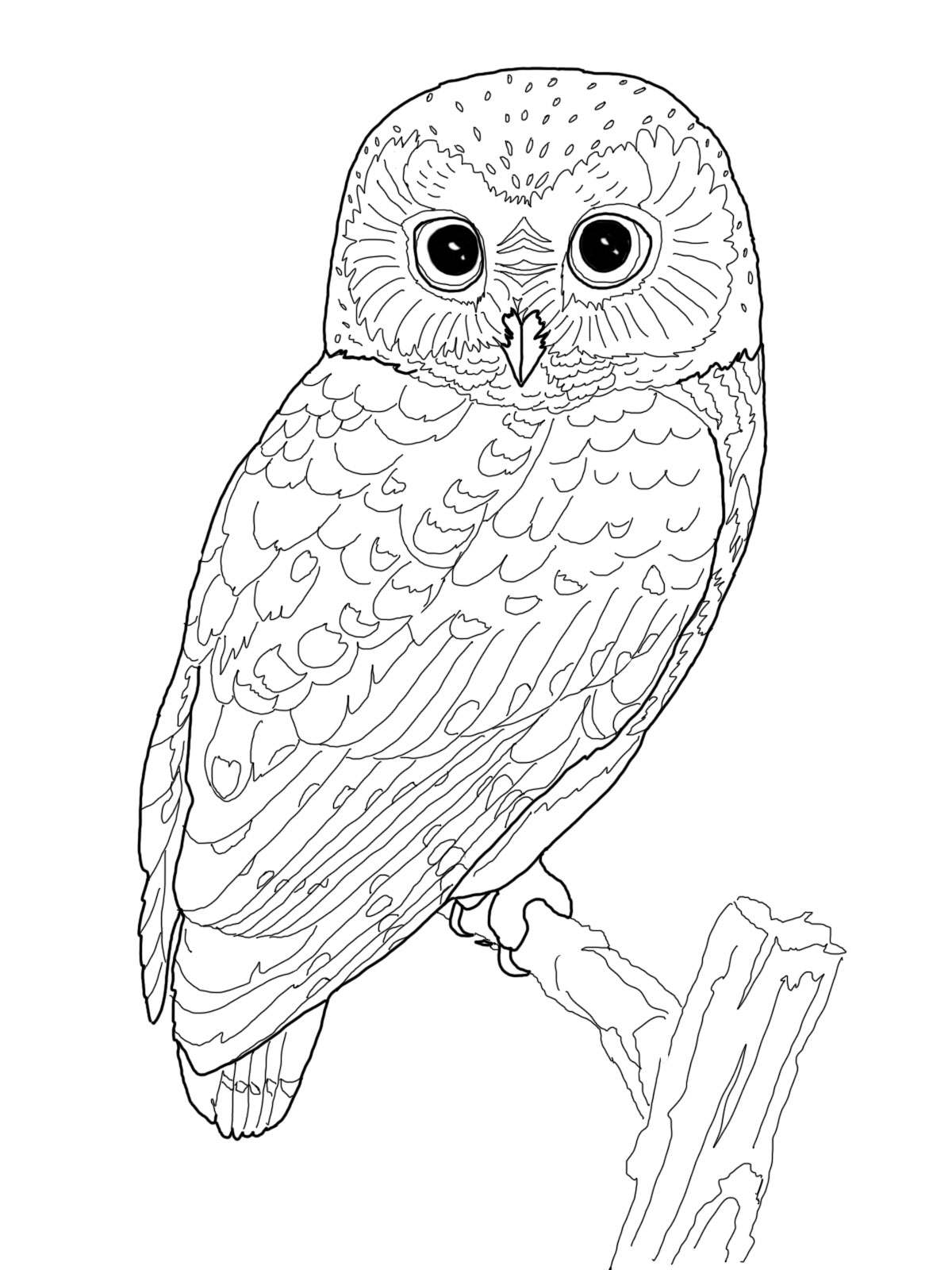coloring pages of barn owls - photo#24