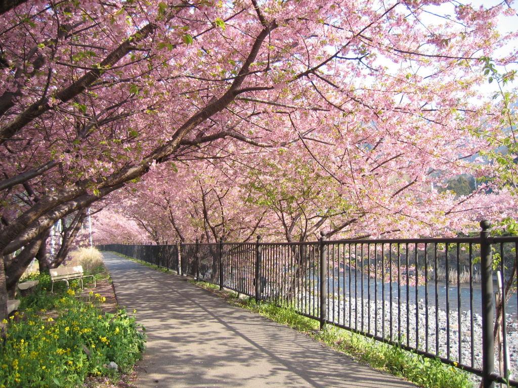 http://1.bp.blogspot.com/-C_QKRu7vfdA/USGHmQb7ddI/AAAAAAAAAos/Kj4hGk6CXA4/s1600/bunga-sakura.jpg
