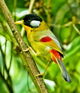 Mengatasi Bulu Burung yang Lepas Tanpa Sengaja