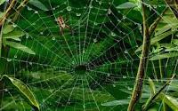 Allah'tan başka dostlar edinenlerin durumu, örümceğin durumu gibidir. Örümcek bir yuva edinir; halbuki yuvaların en çürüğü şüphesiz örümcek yuvasıdır. Keşke bilselerdi!