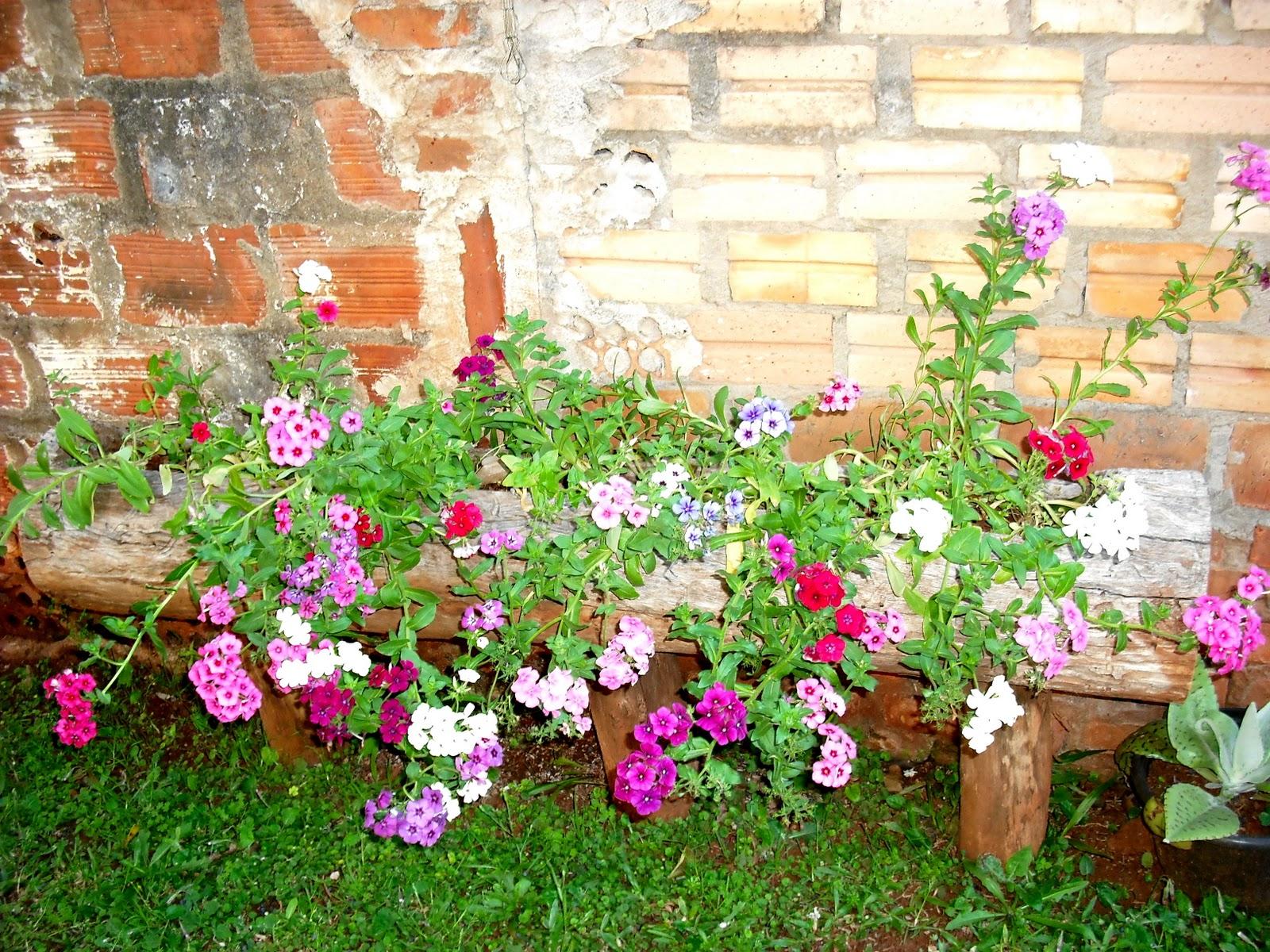 flores no jardim de deus : flores no jardim de deus:quarta-feira, 21 de setembro de 2011