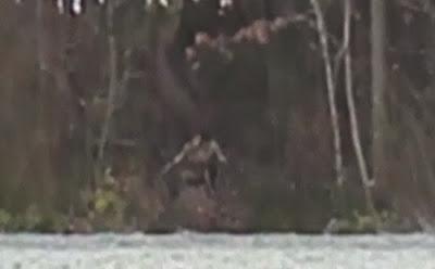 rara criatura en un bosque en Estados Unidos