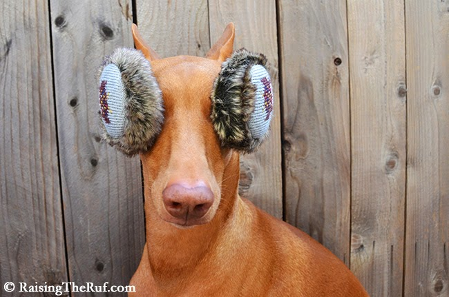 dog ear muffs
