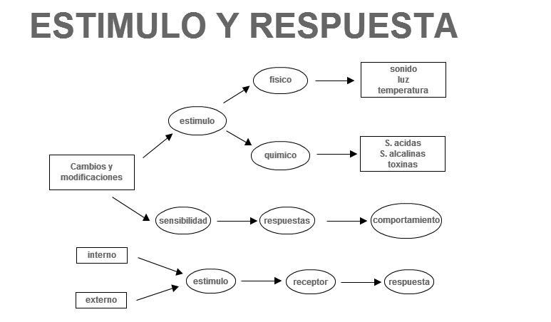 Estimulo Y Respuesta Biologia Seranmilro