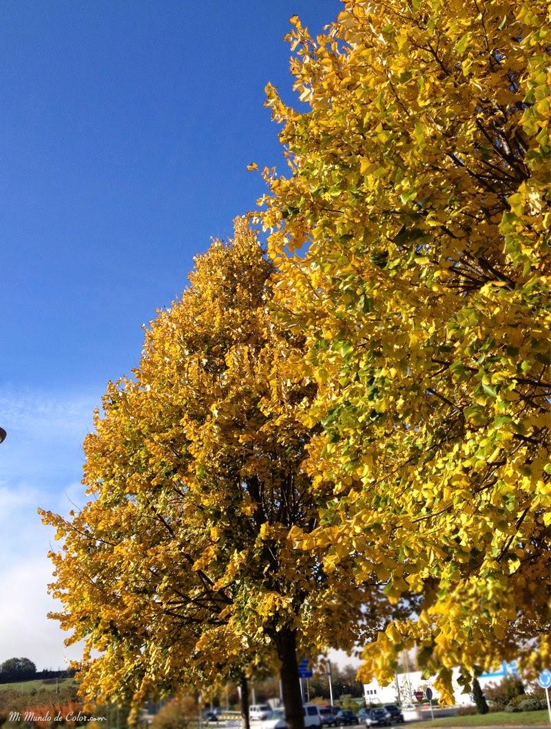 caída empañado amarilla