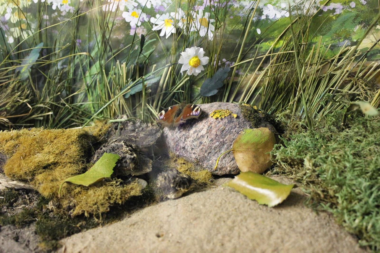 экскурсия в музей экологии  и природы