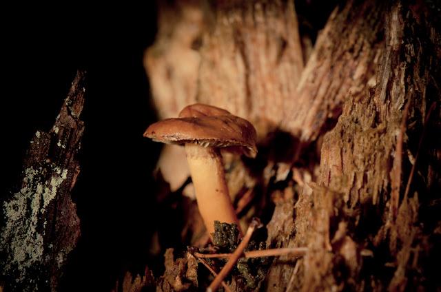 pilz mushroom