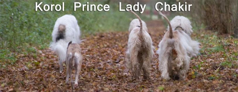 Prince Lady Korol Chakir