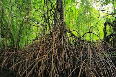 "<a href=""http://mataram.info/things-to-do-in-bali/visitindonesia-banda-marine-life-the-paradise-of-diving-topographic-point-inward-fundamental-maluku/"">Indonesia</a>best destinations : Mangrove Warm Tub Inward Jailolo"