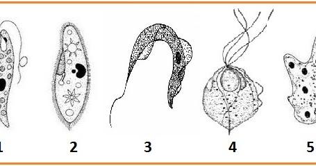 Ulangan Umum Smstr 2 Dan Un 2013 Inti Sari Biologi