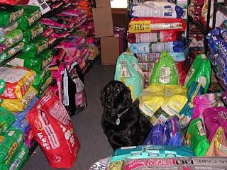 Dog Training Using Returns Foodstuff as well as Goodies