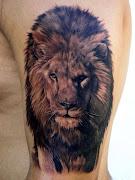 Animal Tattoos (liontattoo)