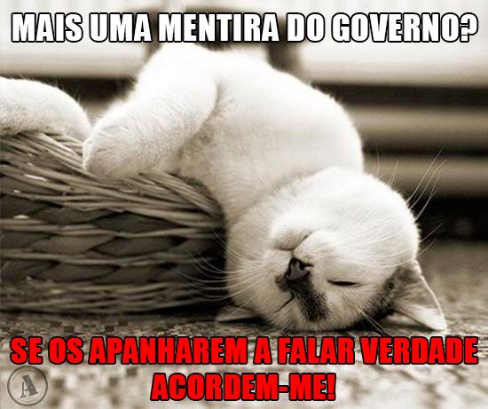 Gato a dormir – Mais uma mentira do governo? Se os apanharem a falar verdade acordem-me!