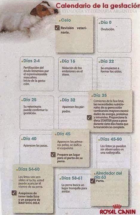 Calendario de la gestación