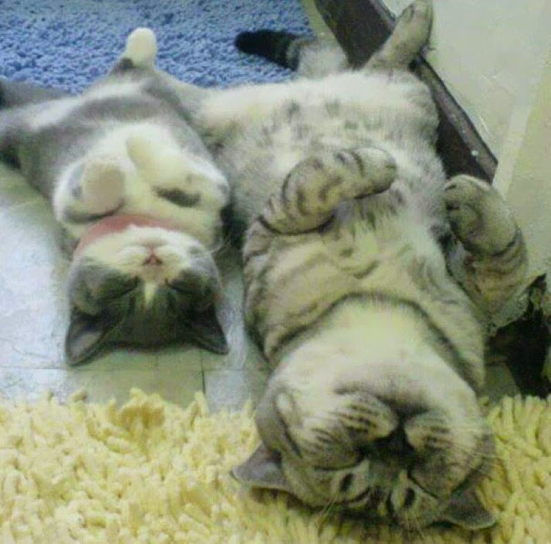 25. A father cat relaxing with his son. - 30 Animals With Their Adorable Mini-Me Counterparts