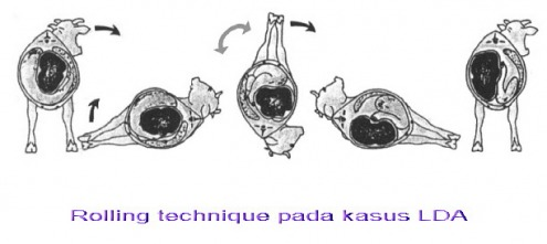 diagram of bloat  diagram  free engine image for user