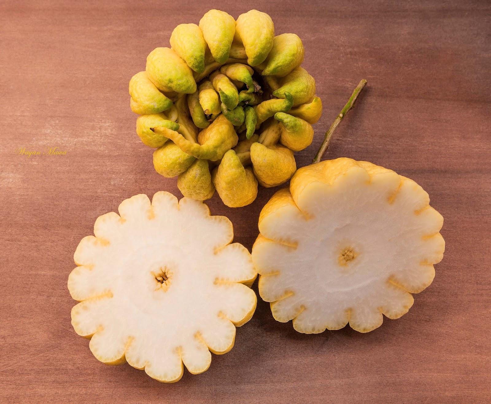 mawanusa blog the buddha 39 s hand citrus fruit. Black Bedroom Furniture Sets. Home Design Ideas