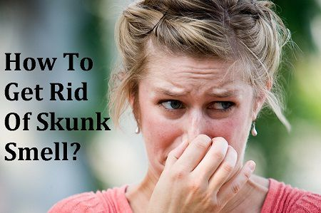 How to get rid of skunk smell in house, Car and Clothes?