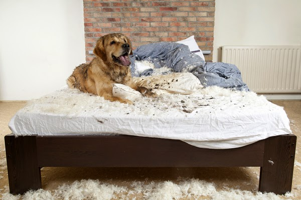 perro jugando y destruyendo la cama
