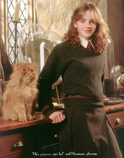 Crookshanks, kucing milik Hermione Granger