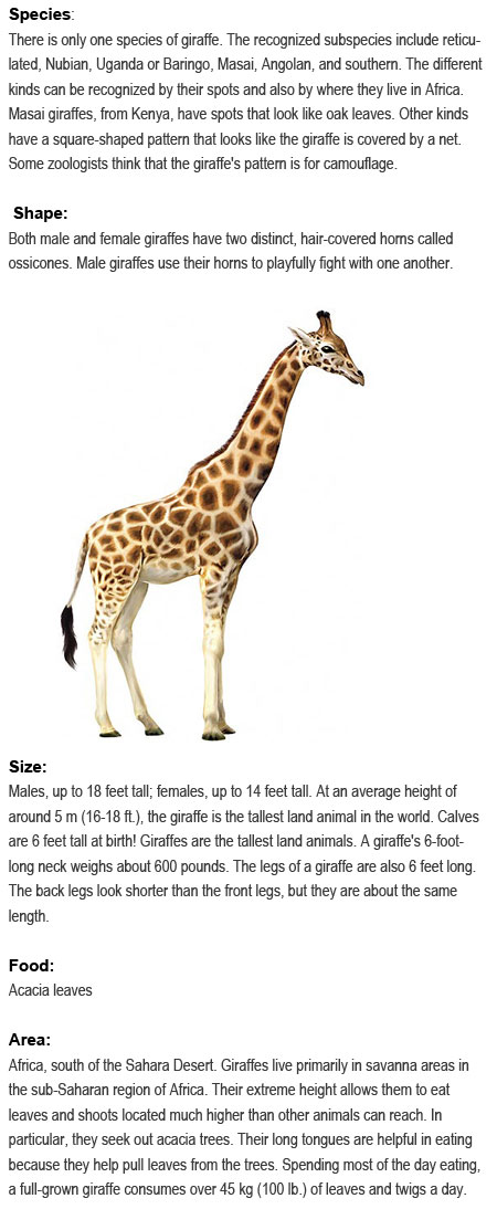 Facts about Giraffes for kids