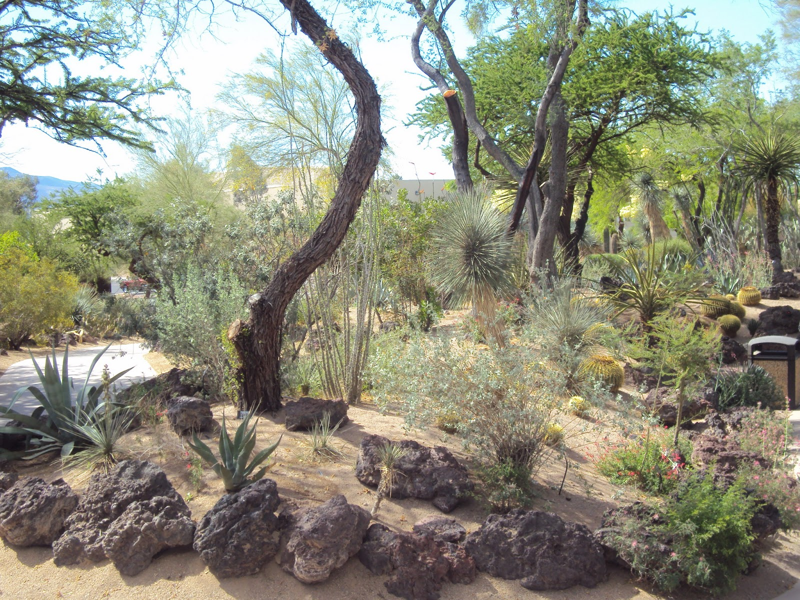 We Then Headed To The Unique, Three Acre Botanical Cactus Garden. It  Features More Than 300 Types Of Cactus Including Spotted Aloe, Agave  Plants, ...