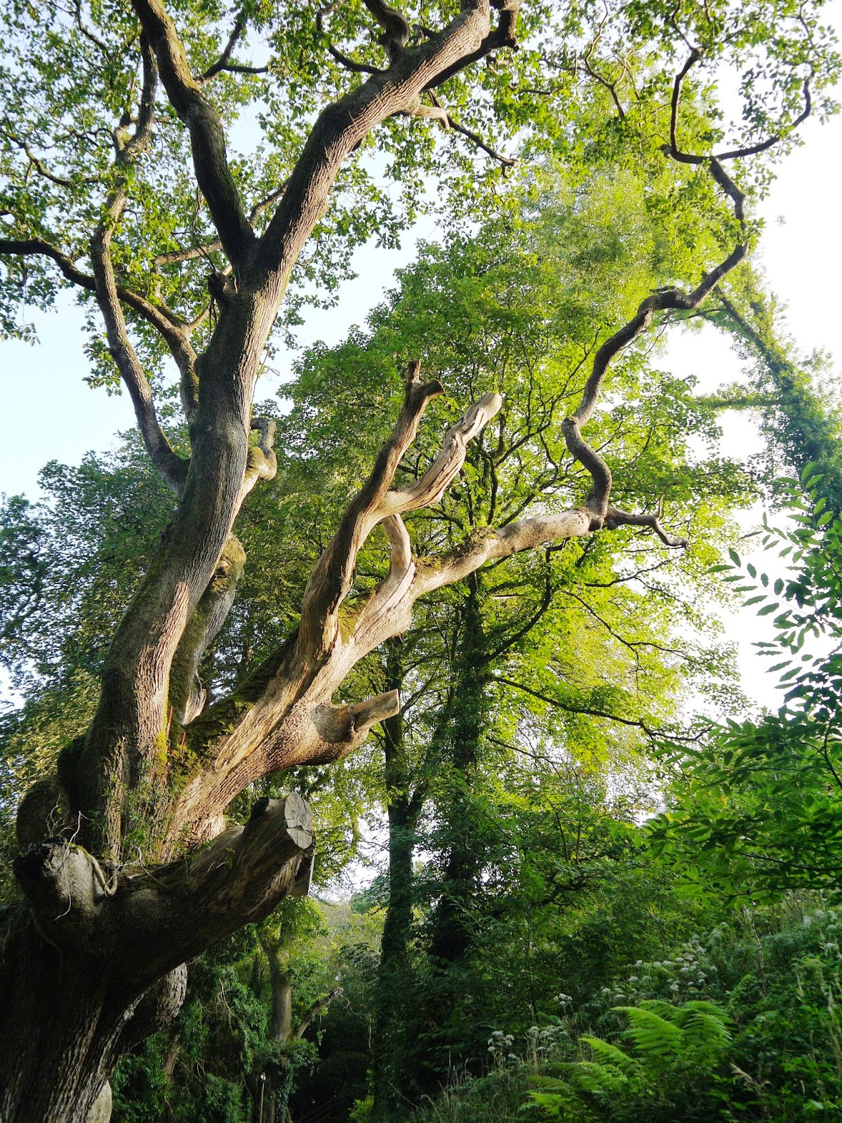 The Lost Gardens of Heligan, Cornwall - tall trees